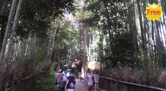 bamboo_forest3