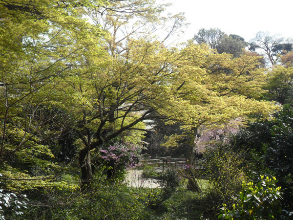 Free, beautiful and colourful! Chinzanso Garden in Tokyo | Cheapo